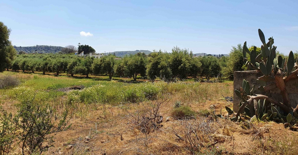 LAND PLOT 800 m² FOR SALE IN VORI