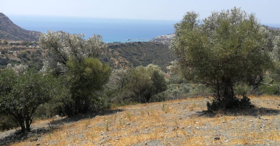 LARGE LAND PLOT 28 ACRES FOR SALE NEAR AGIA GALINI