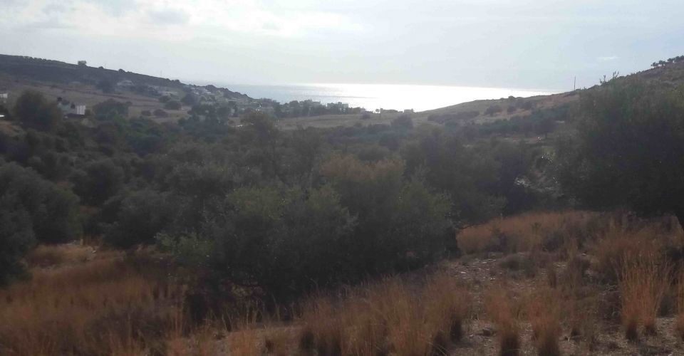 LAND PLOT FOR SALE IN KALAMAKI