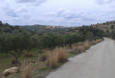 LAND PLOT OF 30 ACRES FOR SALE IN KOUSES