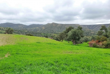 LAND PLOT 9700 m² FOR SALE IN PITSIDIA