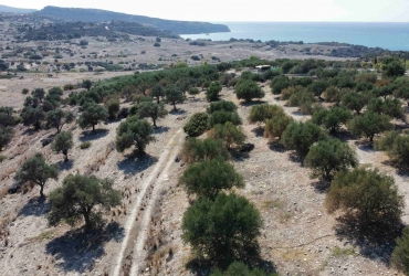 LAND PLOT 4800 m² FOR SALE IN PITSIDIA (KOMMOS)