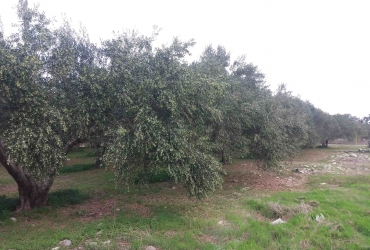 AGRICULTURAL LAND 4.500 m² FOR SALE IN HOUSTOULIANA