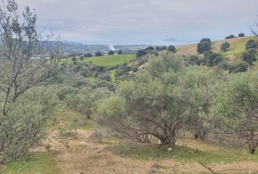 LAND PLOT OF 33 ACRES FOR SALE IN VORI