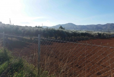 LAND PLOT 4 ACRES FOR SALE IN MIRES