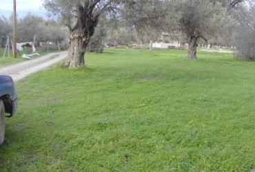 LAND PLOT 2000 m² FOR SALE IN TIMBAKI (ZONED)