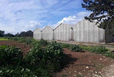 AGRICULTURAL LAND FOR SALE WITH 5.5 ACRES GREENHOUSE