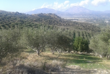 AGRICULTURAL LAND 200 ACRES FOR SALE IN VORI