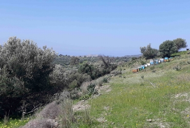 LAND PLOT 3300 m² FOR SALE IN LISTAROS