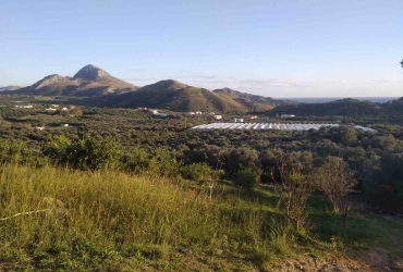 PERCEEL 13 ACRES TE KOOP IN PLAKIAS