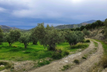 AGRICULTURAL LAND PLOT OF 80 ACRES FOR SALE IN AGIA GALINI