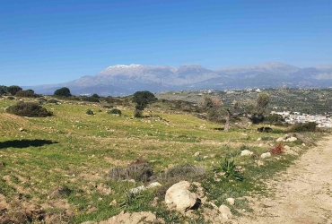 LAND PLOT 3658 m² FOR SALE IN PITSIDIA