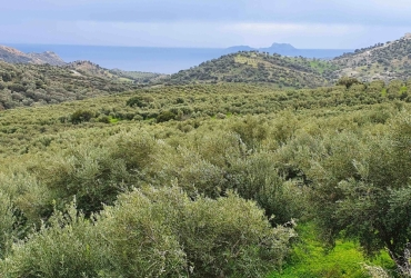 AGRICULTURAL LAND PLOT OF 130 ACRES FOR SALE IN AGIA GALINI