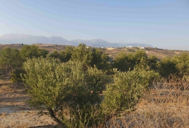 LAND PLOT 4.008 m² FOR SALE IN PITSIDIA