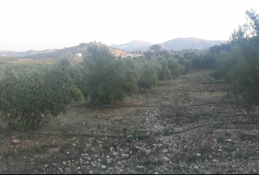 LAND PLOT 2300 m² FOR SALE IN PITSIDIA
