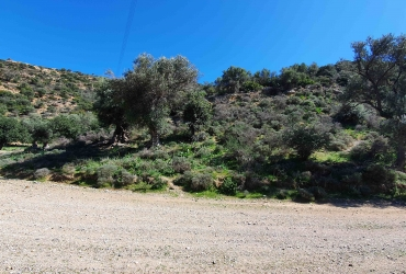 AGRICULTURAL LAND PLOT OF 8 ACRES FOR SALE IN AGIA GALINI