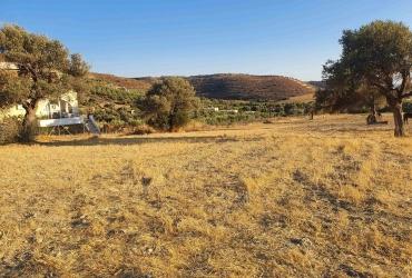 LAND PLOT 4400 m² FOR SALE IN KALAMAKI