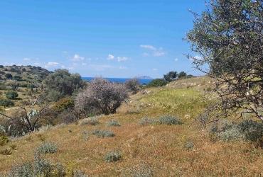 LAND PLOT 4.800 m² FOR SALE IN PITSIDIA (KOMOS)
