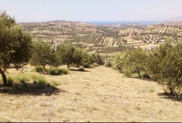 LAND PLOT 5360 m² FOR SALE IN SIVAS