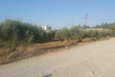 LAND PLOT 10.000 m² FOR SALE IN POMBIA