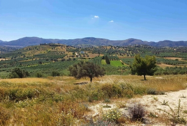 LAND PLOT 4.000 m² FOR SALE IN SIVAS