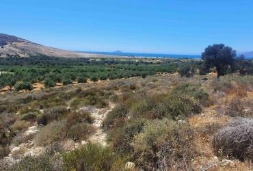 LAND PLOT 12.000 m² FOR SALE IN KALAMAKI (AFRATHIAS)