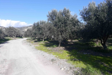 AGRICULTURAL LAND PLOT FOR SALE IN AMPELOUZOS