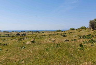 LAND PLOT 5500 m² FOR SALE IN PITSIDIA (KOMOS)