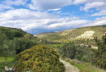 LAND PLOT 5.500 m² FOR SALE IN PITSIDIA