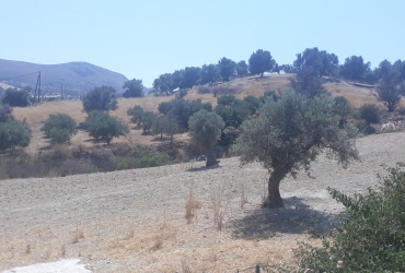LAND PLOT FOR SALE IN SIVAS