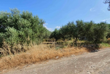 AGRICULTURAL LAND 12.500 m² FOR SALE IN PLATANOS