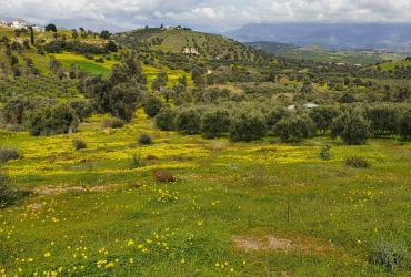 LAND PLOT OF 6 ACRES FOR SALE IN SIVAS